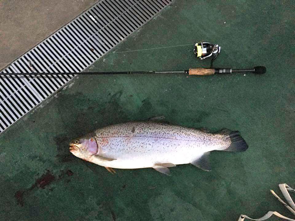 フィネッツァで釣ったトラウト